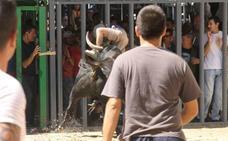 Tres heridos por asta de toro, uno de ellos con varias cornadas, en Burriana