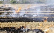L'Albufera se dividirá en dos áreas para la quema de la paja del arroz