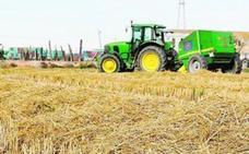 Los mil usos de la paja del arroz