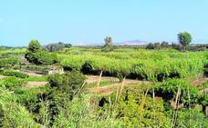 El Consistorio pagará 500 euros por hectárea para limpiar el Parc del Túria