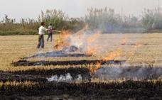 Medio Ambiente permite quemar la paja en dos áreas de forma alternativa