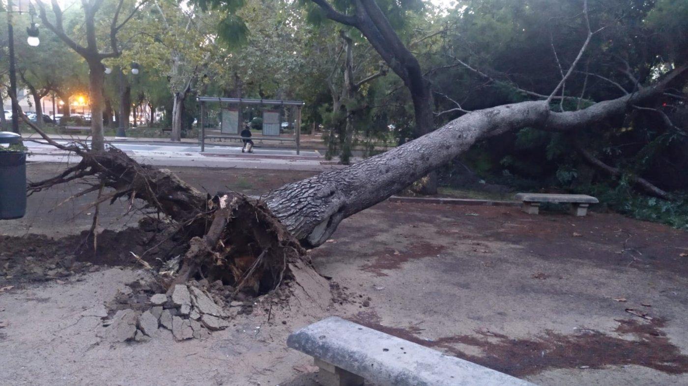 Un árbol se desploma en Blasco Ibáñez