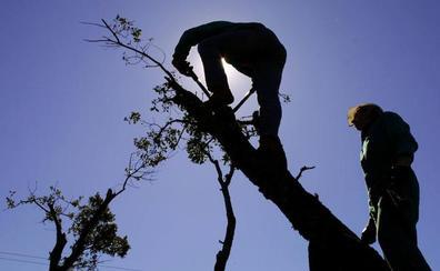 Un hombre sufre un traumatismo craneal severo al caer de una escalera cuando podaba un árbol en Náquera