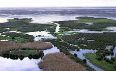 Los parlamentarios europeos chequean la salud medioambiental de Doñana