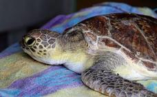 Encuentran una tortuga muerta en la vagina de una mujer