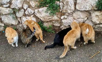 Desvelado el misterio del asesino en serie de gatos