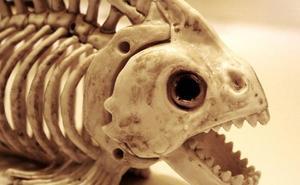 Así se come en DiverXO: el viaje de la piraña
