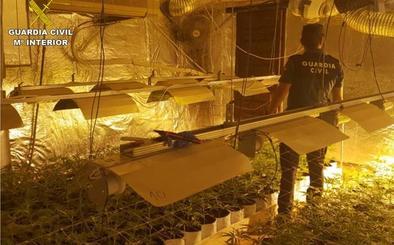 Desmantelan un cultivo de 1.300 plantas de marihuana en Monóvar vigilado por el móvil