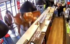 Esto es lo que pasa cuando un caballo se cuela en un bar