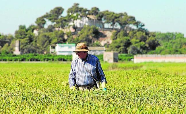 Ayudas de Consell para entidades agroalimentarias