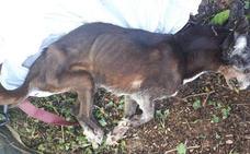 La policía busca al dueño de una maleta con un perro muerto en Burjassot