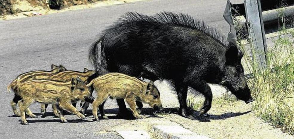Los animales causan 800 accidentes de tráfico al año en la Comunitat