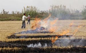 El Consell autoriza adelantar el fangueo del arroz para evitar que se contamine el agua de la Albufera