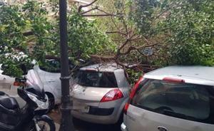 Cae un árbol sobre tres coches en Valencia tras una fuerte racha de viento y lluvia