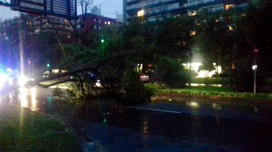 El temporal tumba un árbol en la avenida Blasco Ibáñez de Valencia