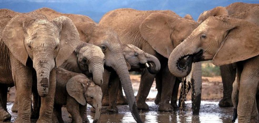 Inteligencia Artificial para salvar elefantes y el medio ambiente