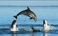 Avistan en la Costa del Sol una especie de delfín que se creía desaparecida del Mediterráneo
