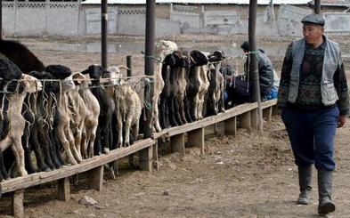 La Ruta de la Seda ya albergaba a pastores de alta montaña hace más de 4.000 años