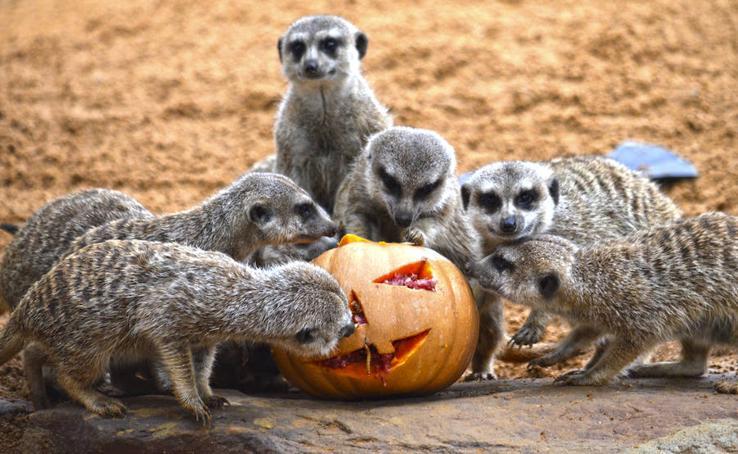 Así celebran Halloween los animales del Bioparc