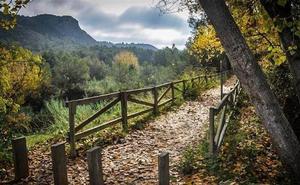 17 bosques valencianos para una escapada otoñal