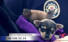 La Policía encuentra 56 perros encerrados en un piso