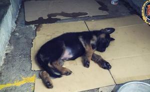 La Policía Local adopta a un cachorro tras detener a su dueño por maltrato