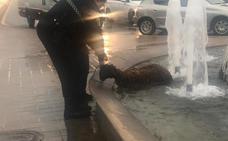 La policía rescata una oveja en la avenida del Cid