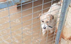 Una protectora de Valencia inundada por las lluvias busca refugio para sus animales