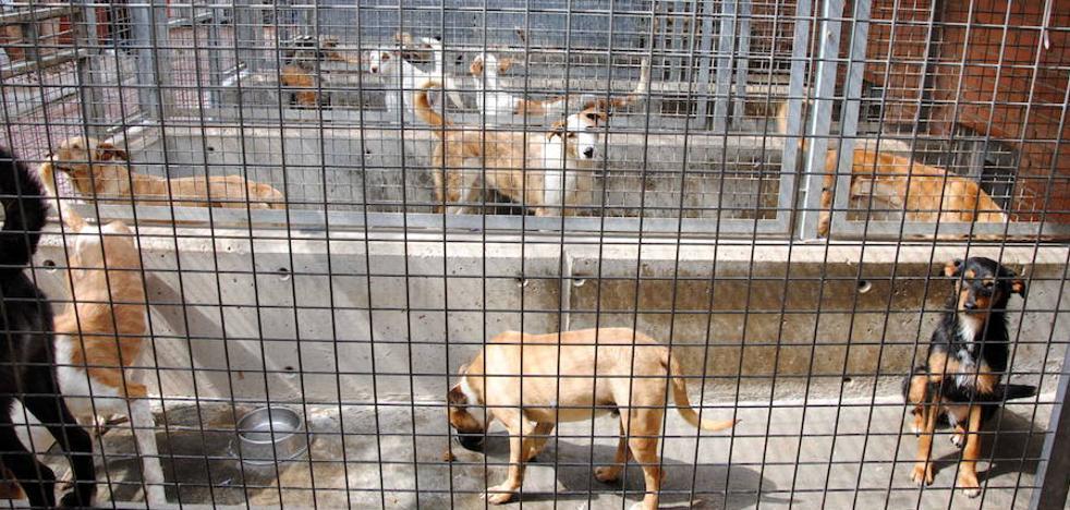 Masiva respuesta para acoger a los perros del refugio inundado en Valencia