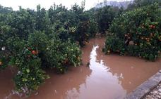 Los agricultores cifran en hasta 120 millones las pérdidas por el temporal