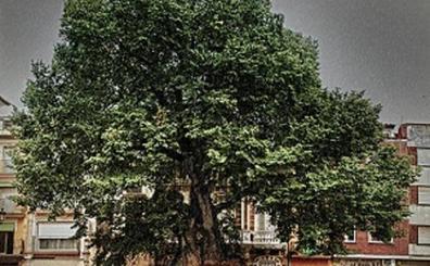 El mejor árbol de España es valenciano