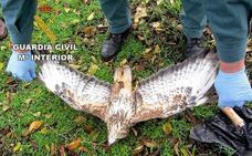 Detenido un hombre por envenenar a dos águilas, una de ellas en peligro de extinción