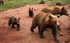 16 destinos para ver animales salvajes en libertad