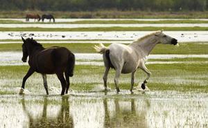 16 destinos para ver animales salvajes en libertad durante el puente de la Constitución