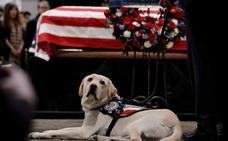 Sully, el leal compañero de George Bush, conmueve en el funeral de su dueño