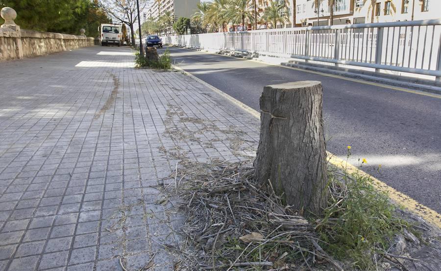 Una tala exprés acaba con una decena de árboles junto al jardín del Turia