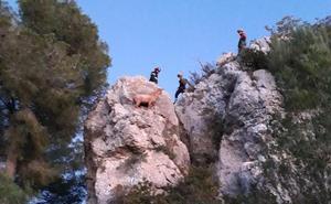 Los bomberos rescatan a una cabra que llevaba varios días atrapada en una zona escarpada de Xàbia