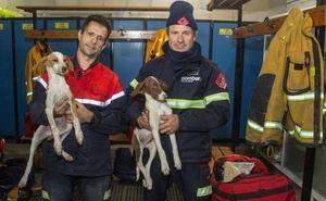 Rescatan a cuatro perros atrapados en un tubería a tres metros bajo tierra