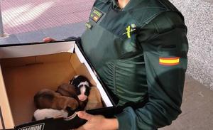 Tiran a 5 cachorros dentro de una bolsa en un contenedor de Benicarló