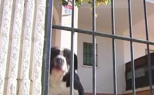 Un 'okupa' emplea perros agresivos para evitar que entren en una vivienda en Sevilla que luego subalquila
