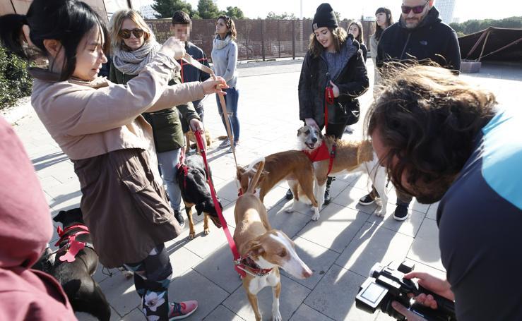 Desfile solidario de Navidad de perros abandonados en BIOPARC