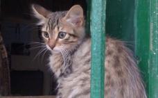Un gato, enviado por error dentro de un paquete de mensajería