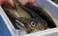 La pesca de la merluza cantábrica termina con cuatro años de recortes
