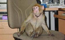 Condenan a tres años de cárcel a una mujer por masturbar a un mono en una tienda de animales