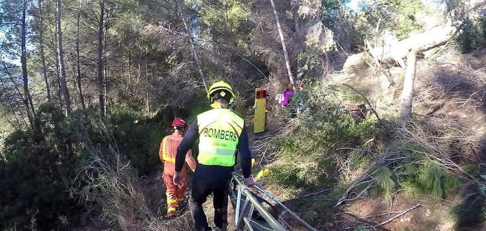 Un hombre, herido grave al caerle un árbol encima en Xàtiva