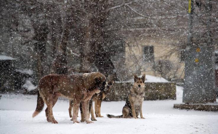 Frío y nieve en España este 22 de enero