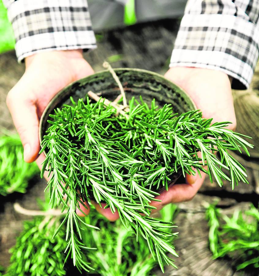 Cómo hacer el jardín de casa un rincón sostenible y ecológico