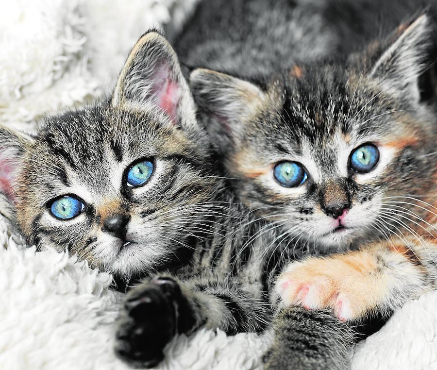 Claves para que más de un gato pueda convivir en casa