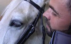 Unicornio, el caballo policía que servirá a la Asociación de Terapias Ecuestres de Valencia