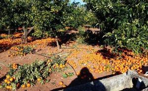 La Conselleria de Agricultura pide al Gobierno reducir un 30% el IRPF a los cítricos por los problemas comerciales